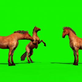 Groups of Brown Horses Animals Run PixelBoom