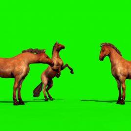 Groups of Brown Horses Animals Run PixelBoom