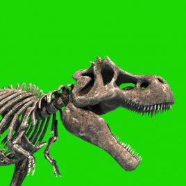 TRex Skeleton Jurassic World PixelBoom