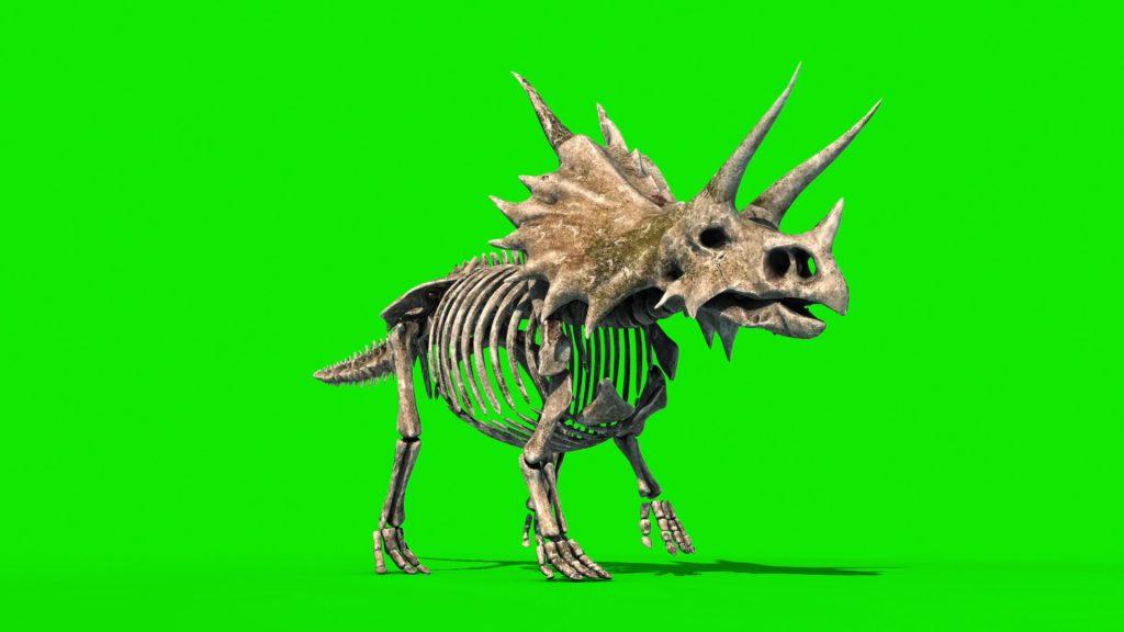 Triceratops Skeleton – 3D Model Animated