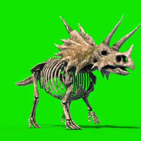 Triceratops Skeleton Jurassic World PixelBoom