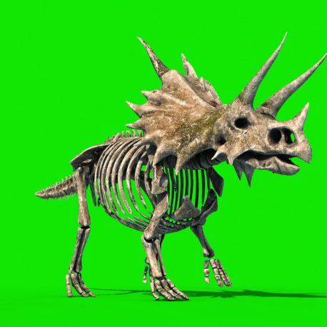 Triceratops Skeleton Jurassic World PixelBoom