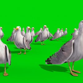 Group of Seagulls – 3D Model Animated