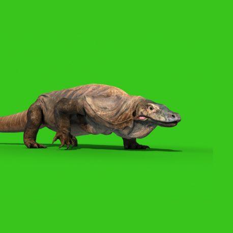 Komodo Dragon (Varanus Komodoensis) Lizard PixelBoom