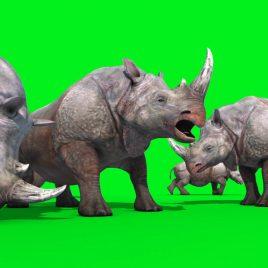 Group of Rhinoceros PixelBoom