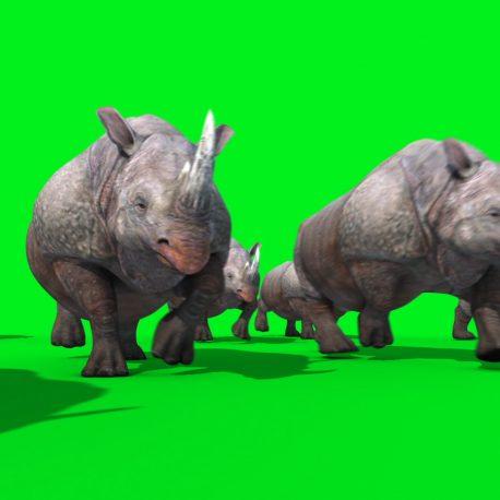 Group of Rhinoceros Runs PixelBoom
