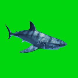 White Shark Swim Fast Attack PixelBoom