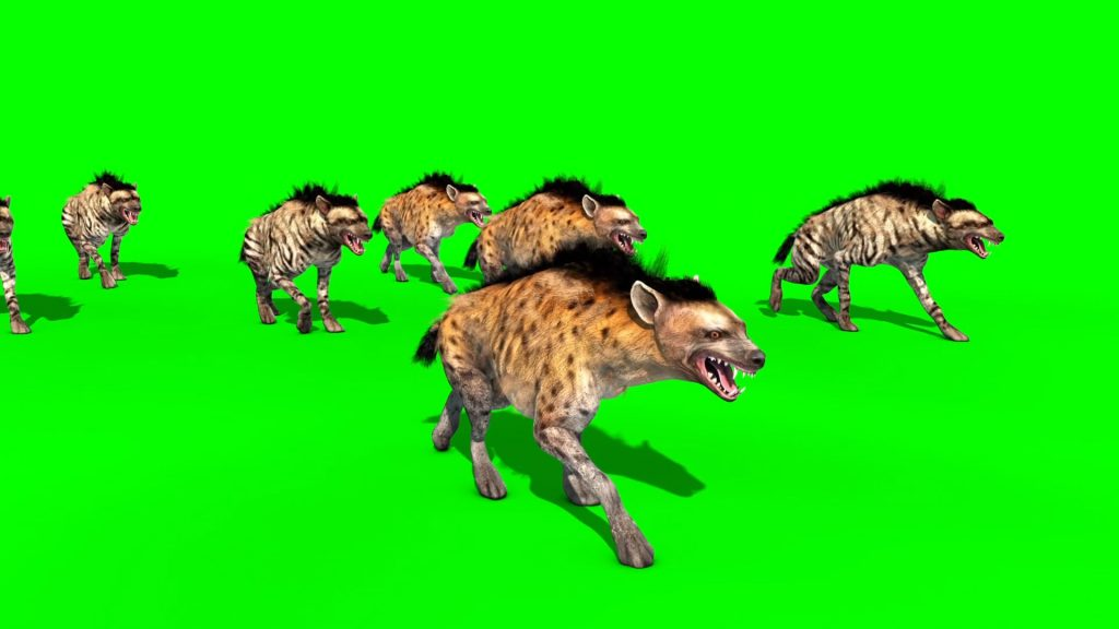 Herd of Hyenas – 3D Model Animated