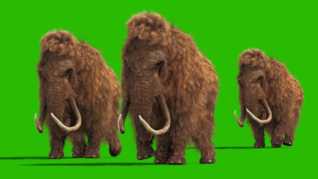 Mammoth Real Fur – 3D Model Animated