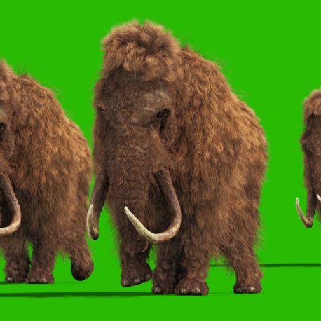 Mammoth Real Fur Walk Animal Jurassic PixelBoom