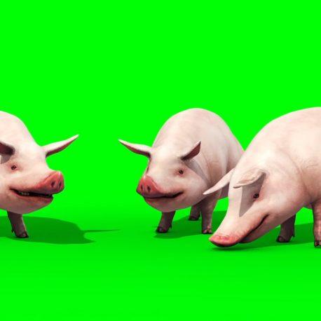 Group of Pigs Animals Farm PixelBoom