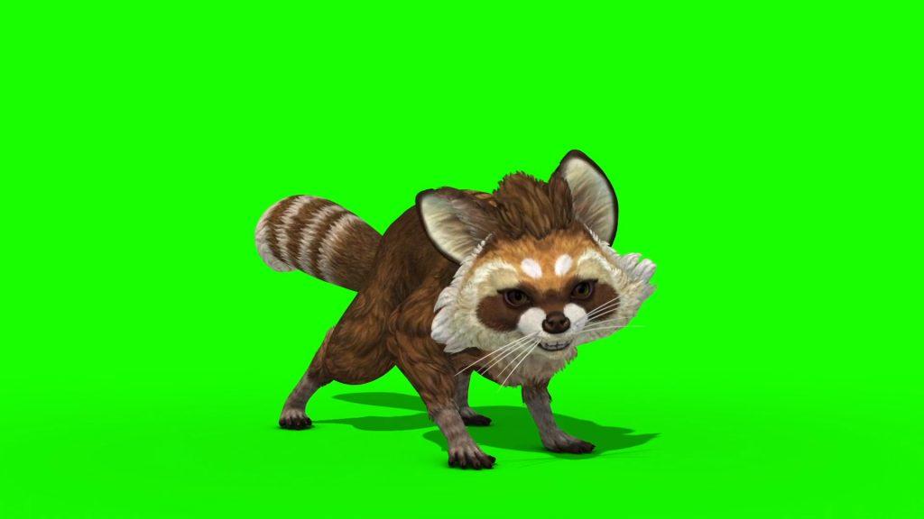 Raccoon Animal – 3D Model Animated
