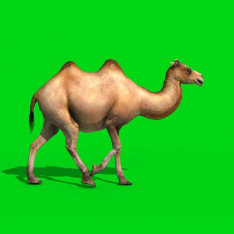 Camel Walks Runs Dies PixelBoom