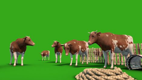 Herd of Cows – 3D Model Animated