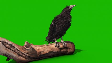 Crow Tombstone – 3D Model Animated