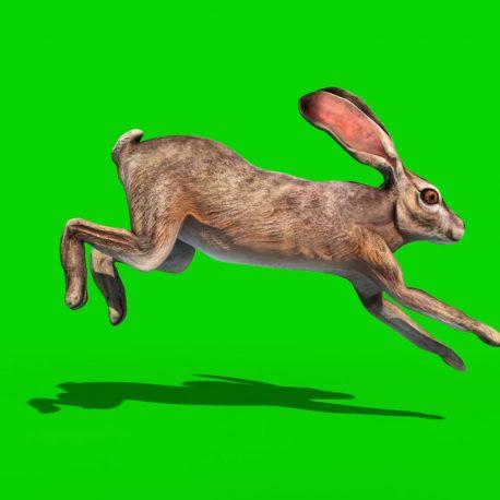 Group of Rabbits Walk Jump PixelBoom