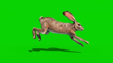 Group of Rabbits – 3D Model Animated