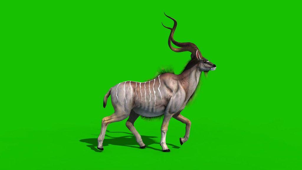 Kudu Antelope – 3D Model Animated