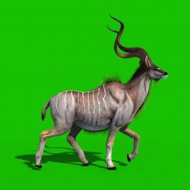 Kudu African Antelope Animals PixelBoom