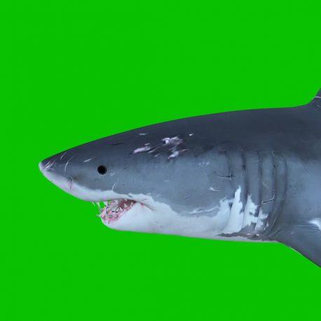 Shark Fin Ocean PixelBoom