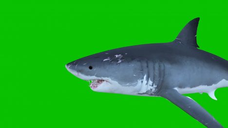 Ocean Shark Fin – 3D Model Animated
