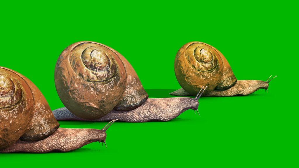 Snail Animals – 3D Model Animated