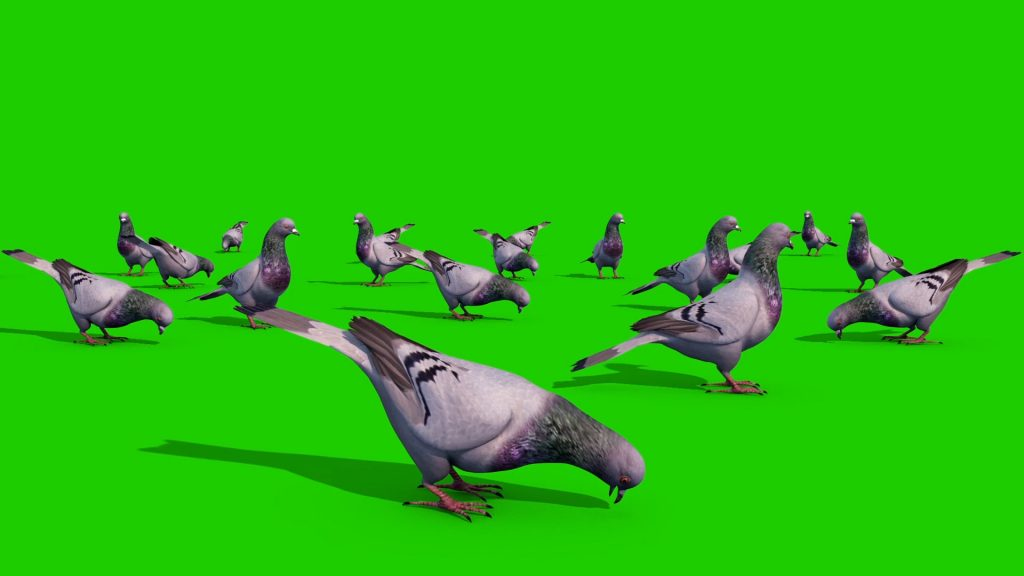 Group of Pigeons – 3D Model Animated
