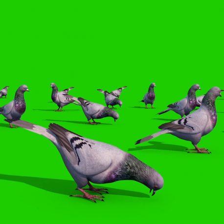 Group of Pigeons Eat PixelBoom