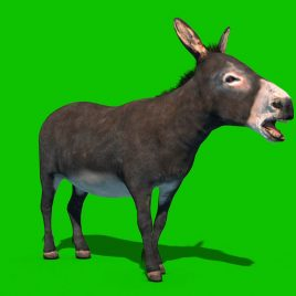 Donkey Animals Animation PixelBoom