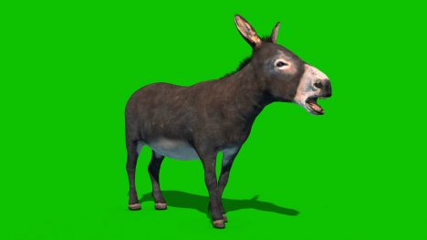 Donkey Animals – 3D Model Animated