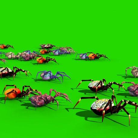 Spiders Tarantula Black Widow PixelBoom