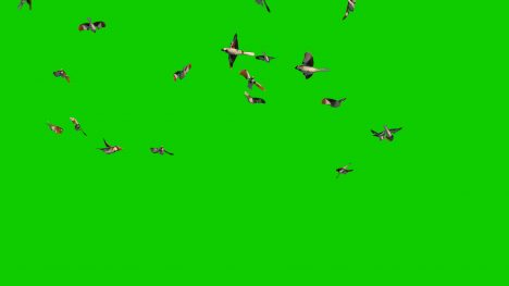 Sparrow Flock – 3D Model Animated