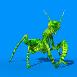 Insect Mantis 3D Animation PixelBoom