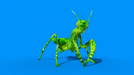 Insect Mantis – 3D Model Animated