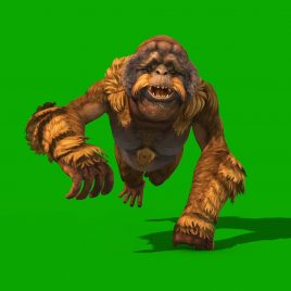 Orangutans 3D Animation PixelBoom