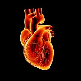 Ekg Heartbeat Monitor Electrocardiogram PixelBoom