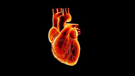 Ekg Heart Monitor – 3D Model Animated