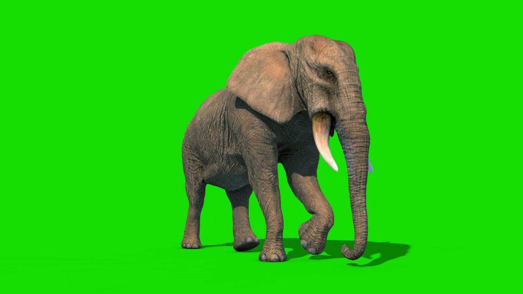 Elephant Short Tusks – 3D Model Animated