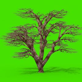 Trees Leaves Wind – 3D Model Animated