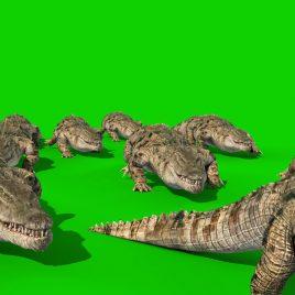 Group of Crocodiles Attack PixelBoom