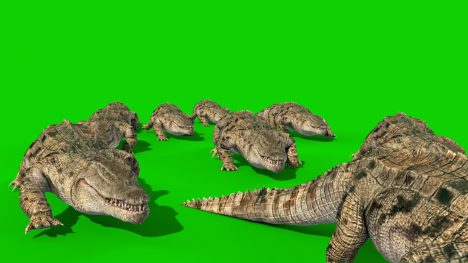 Group of Corocodiles – 3D Model Animated