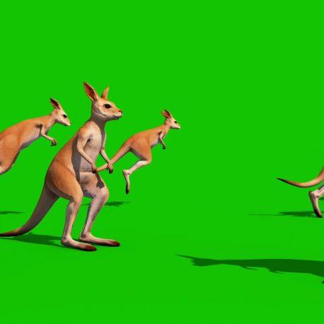 Green Screen Kangaroo Jumping Eat PixelBoom