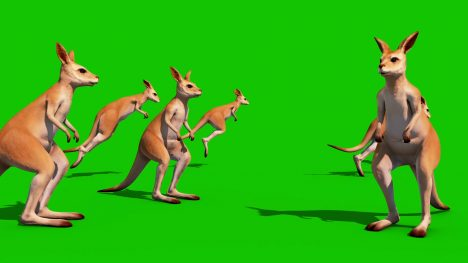 Kangaroo Jumping – 3D Model Animated