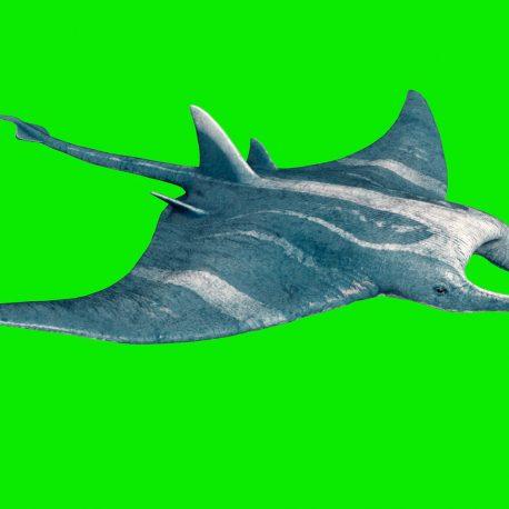 Manta Ray Giant Ocean Green Screen 3D Animation PixelBoom