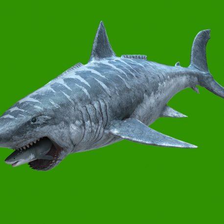 Megalodon Attacks the Shark Green Screen 3D Animation PixelBoom