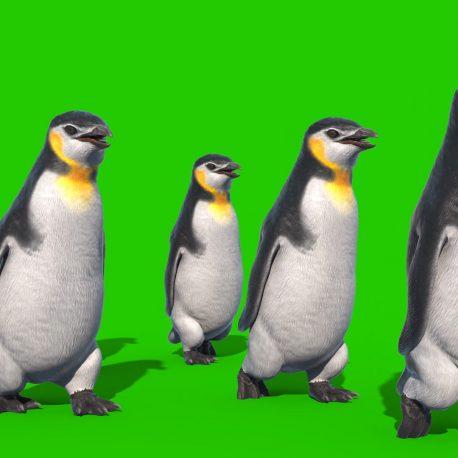 Green Screen Group of Penguins PixelBoom