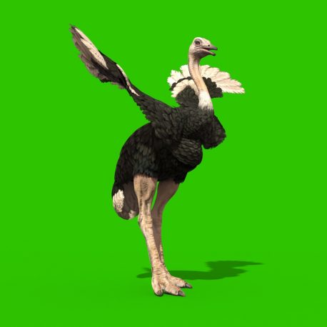 Green Screen Ostrich Animal 3D Animation PixelBoom