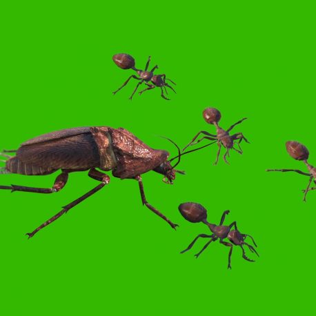 Green Screen Ants and Roaches 3D Animation PixelBoom