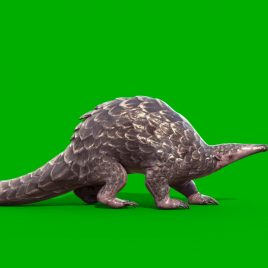 Pangolin – 3D Model Animated