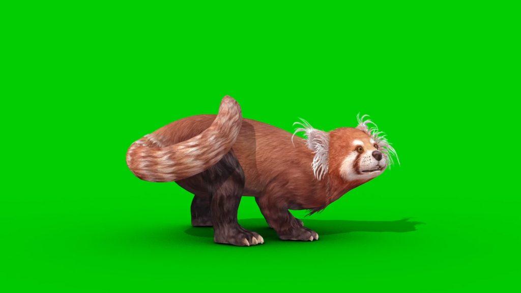 Red Panda Green Screen 3D Animation PixelBoom